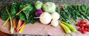 Garden 1st Harvest